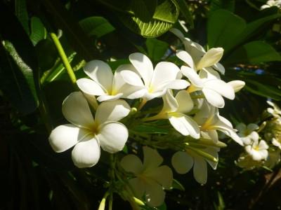 In full bloom along Katherine's streets