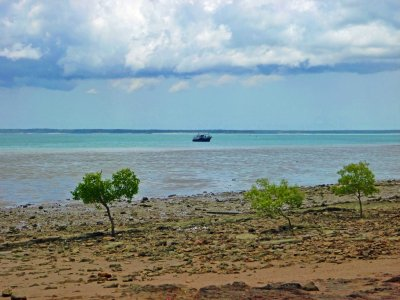 Darwin's beachfront